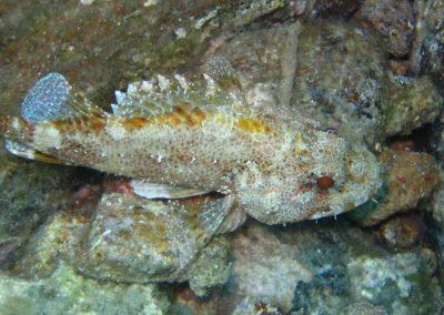 Scuba diving (34)