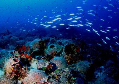 Scuba diving (38)